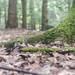 Forest Floor by Kris Di Pietro