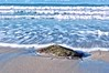 Sennen Beach Nov 2014