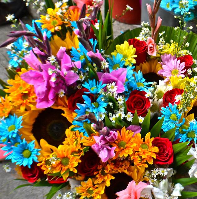 medellin flowers, colombia