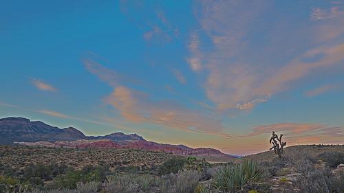 redrockcanyon sunset sky plants usa nature america landscape outside outdoors earth nevada places hdr mojavedesert blm 2014 jashuatree canon5dmarkiii canon1635mmf4islens