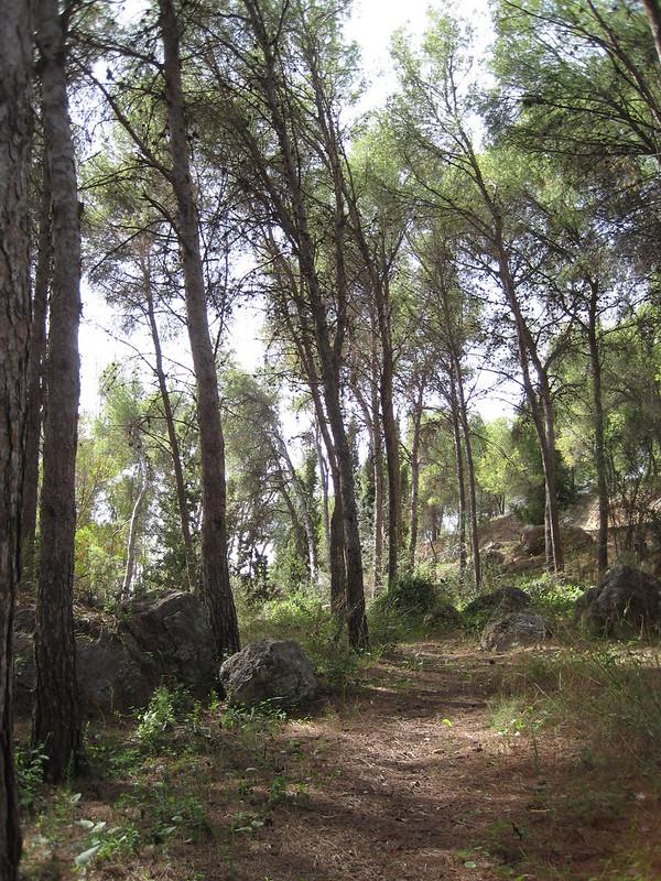Caminando entre árboles