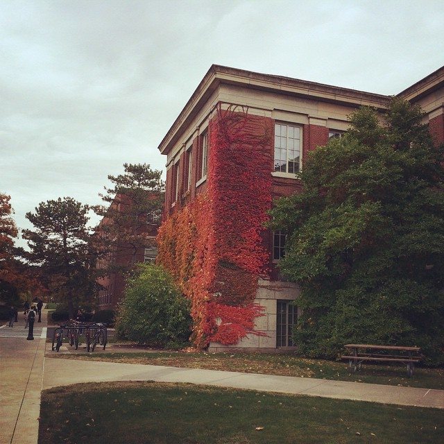 The ivy has turned red. #autumn #oncampus