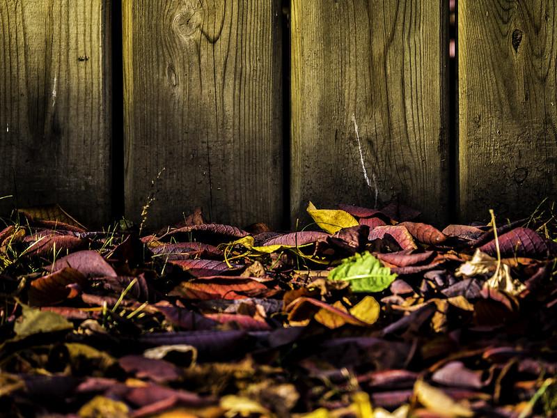leaf us alone028