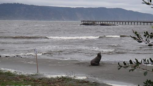 Sad sea lion