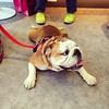 #pet #dog #taiwan #taichung