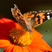insects-10-25-2014-19.jpg