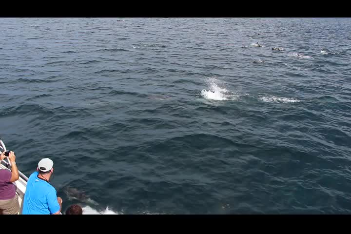 1065 Video of a dolphin pod swimming from the Island Packer Cruises boat as we head back from Santa Cruz Island