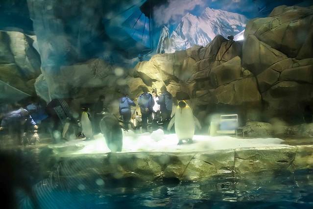 Hongkong ocean adventure penguins
