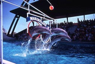 Dolphins at Marineland attraction