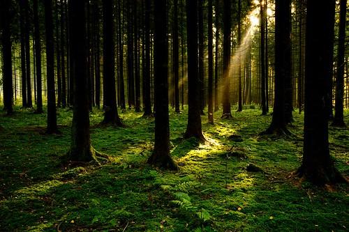 autumn trees tree nature forest germany bayern deutschland bavaria ray sony herbst natur sonne wald bäume sonnenaufgang baum raysoflight rayoflight lichtstrahl sonyα900 sal1635z