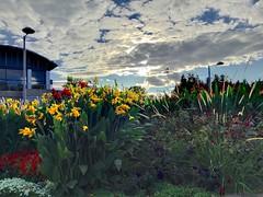 Sky in the park (True HDR app)