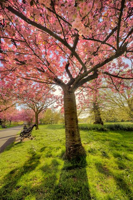 3689 Pink Blossom