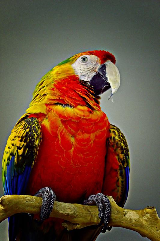 All Kinds Of Parrots :d