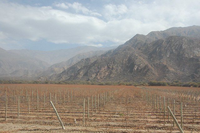 Vineyards Outside Cafayate, Argentina