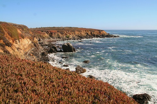 Succlents and Cliffs
