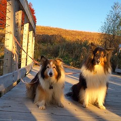 Cupcake and Jasper on the footbridge. #lebanonhills #mn