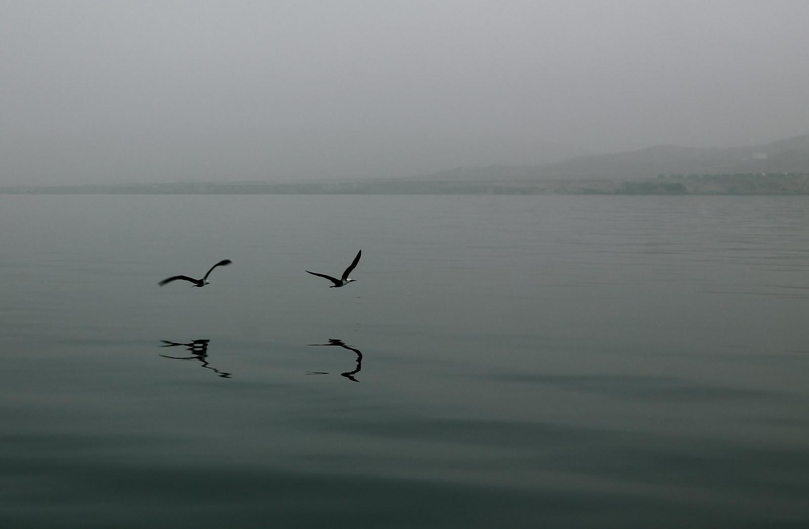 BirdsReflection