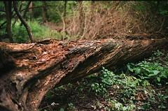 trail(0.0), root(0.0), tree stump(0.0), flower(0.0), autumn(0.0), wildlife(0.0), deciduous(1.0), branch(1.0), leaf(1.0), soil(1.0), grass(1.0), wood(1.0), tree(1.0), sunlight(1.0), nature(1.0), flora(1.0), green(1.0), forest(1.0), trunk(1.0), natural environment(1.0), wilderness(1.0), jungle(1.0),