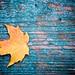 Fall by swilton