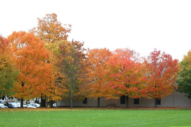 fall-leaves-ontario