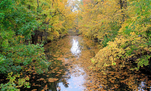 autumn orange fall leaves river nj cranford rahwayriver