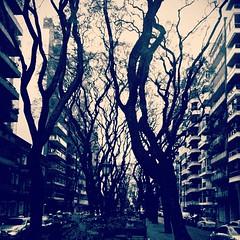 Que el árbol no nos tape el bosque