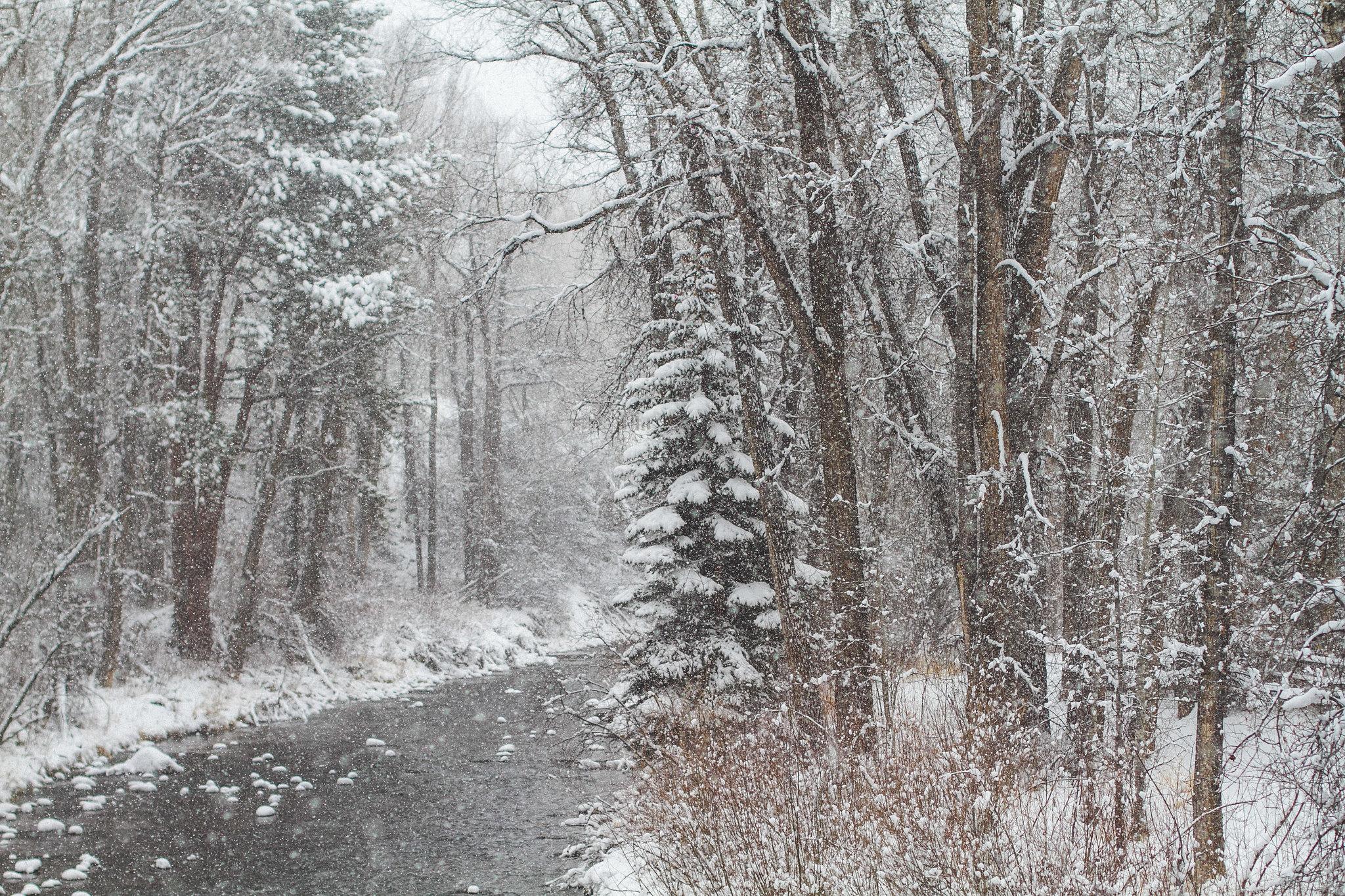Fall Snowstorm