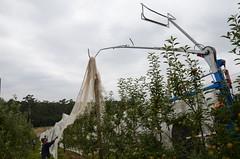 flower(0.0), sculpture(0.0), wind(0.0), monument(0.0), park(0.0), statue(0.0), pole(1.0), tree(1.0),