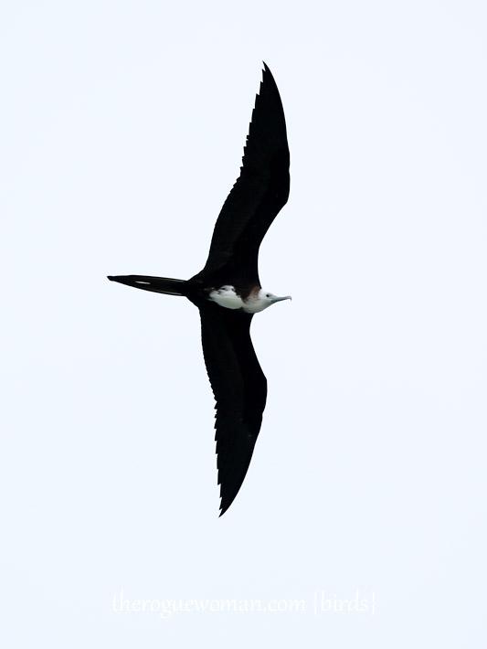 091514_bird26