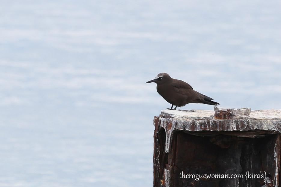 091514_bird22