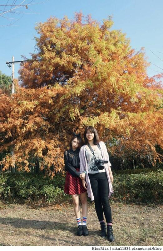 清境觀光巴士 奧萬大森林遊樂區 賞楓31