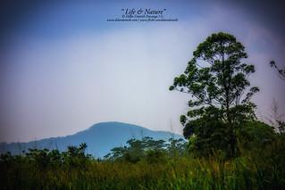 Sinharaja Tropical Rain Forest