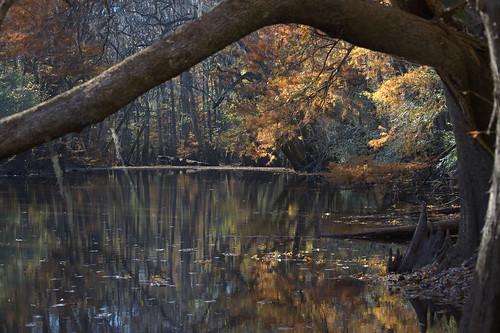Lake Weston in Congaree NP