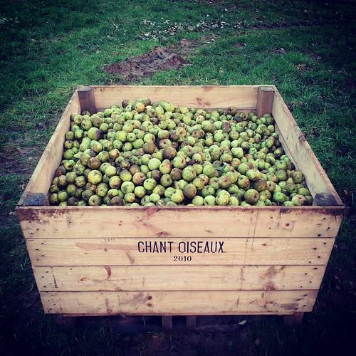 Pallox de pommes vertes