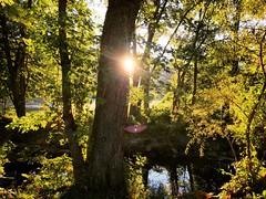 Day's Rays: Bluemont Park, Arlington Virginia 7:57 a.m. 10/11/16