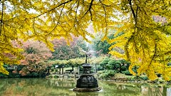 Tree Water Fountain Beauty In Nature Autumn Colors Autumn Leaves Trees