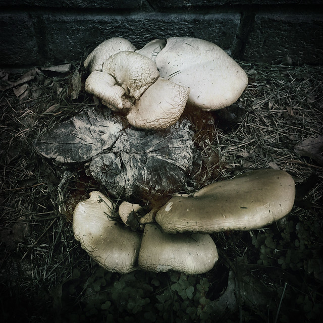 December Mushrooms