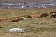 HolderGrey Seals