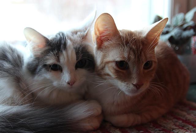 Heyni & Salvia