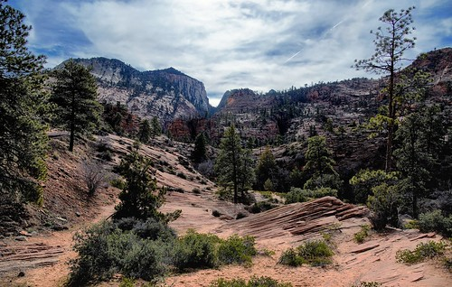 Mountains, Cliffs, Trees and a Rocky Landscape (Zion National Park)