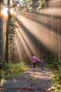 Happiness Is Walking in the Forest