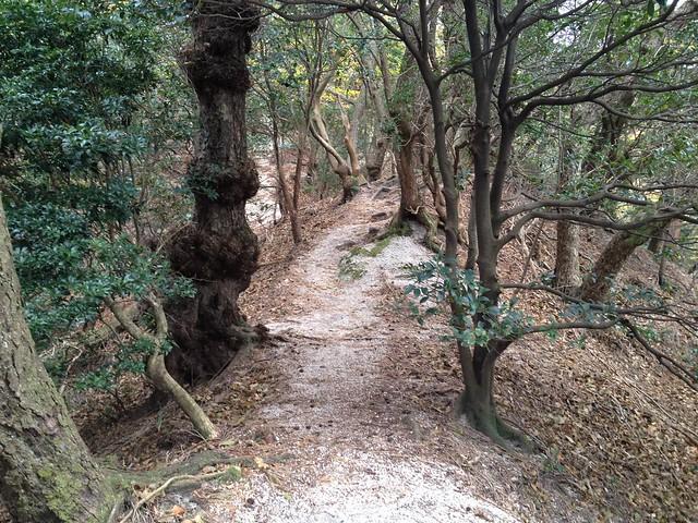 鎌ヶ岳 馬の背尾根 登山道 ザレ尾根