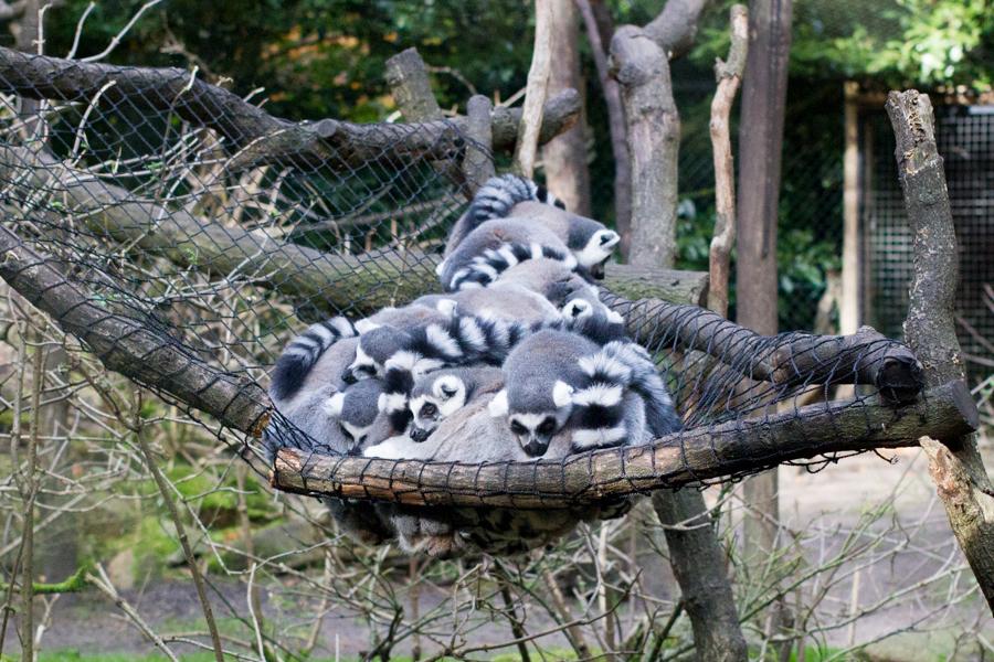 dierentuinamersfoort (6 of 8)