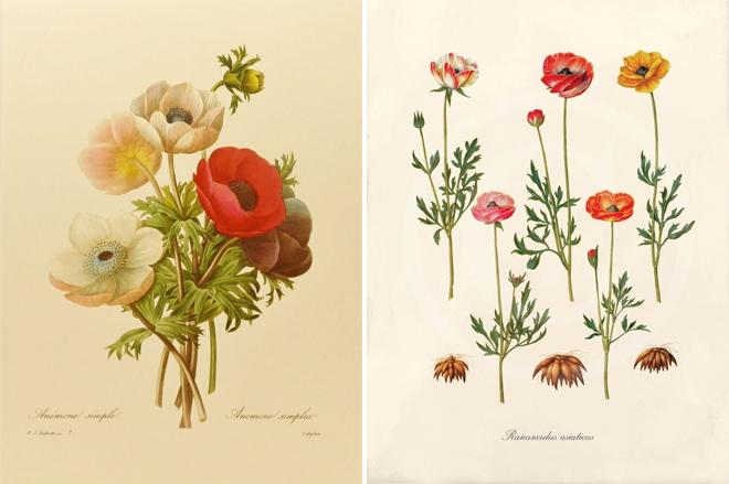 vintage-botanical-prints