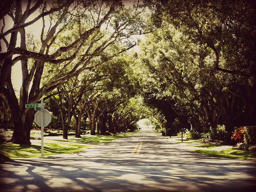 street trees vanishingpoint shade intersection shady depth streetview naplesflorida treelined swfl colliercounty treeshaded