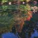 Through the Pond