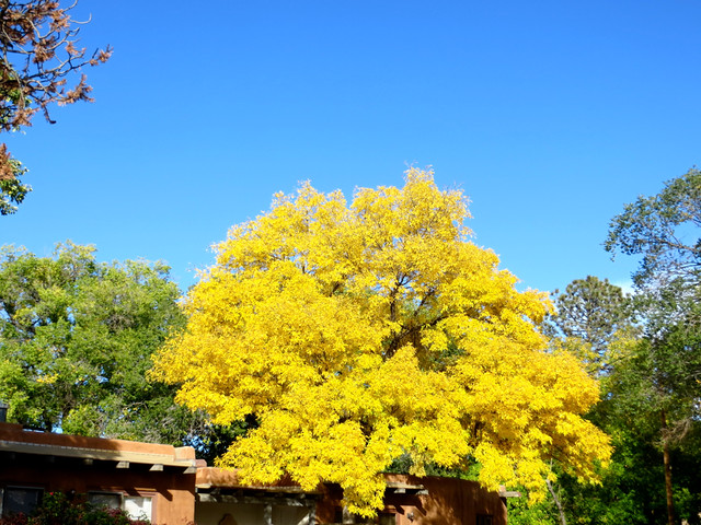 october gold in santa fe