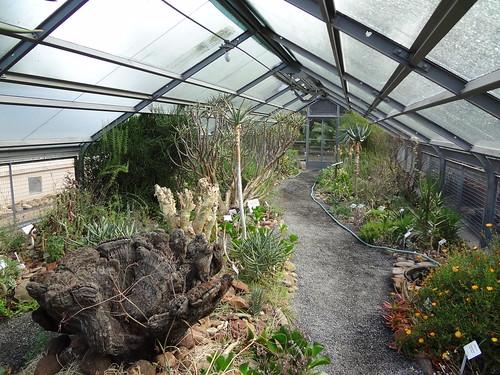 Succulent glasshouse