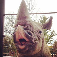 Thank you to the Columbus Zoo and The Wilds for hosting our annual board meeting this year. We especially loved meeting Rosie the black rhino.