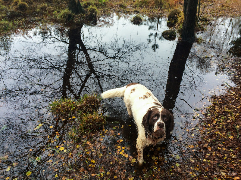 Max in a puddle